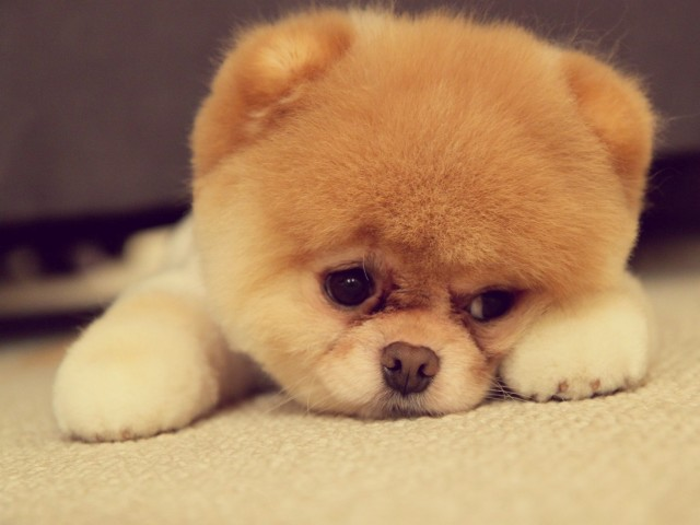 Sad-Puppy-Face-640x480