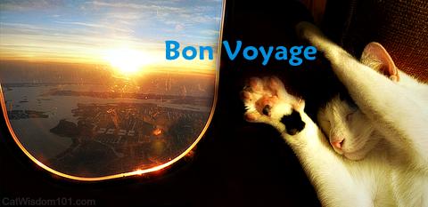 Bon-voyage-cat-flying-airline-humor-Layla-Morgan-Wilde
