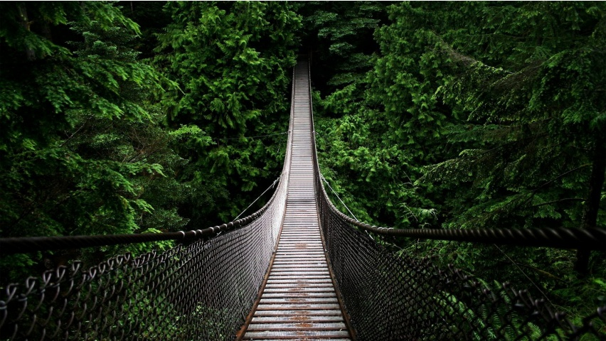 capilano_suspension_bridge_hd_wallpaper-852x480