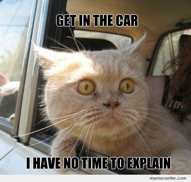 Get-In-The-Car-Cat_o_93402