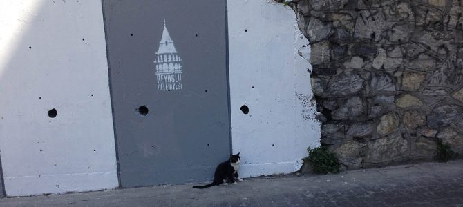 Cats of Istanbul – Part II