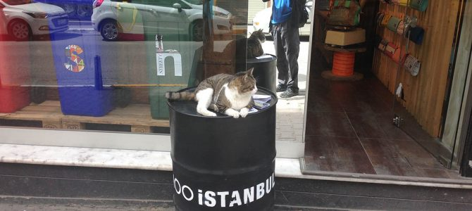 Cats of Istanbul – Part I
