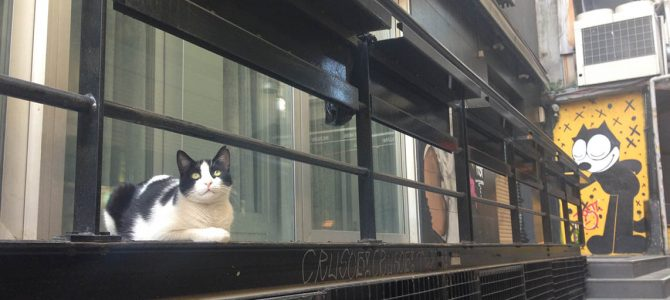 Cats of Istanbul – Part IV