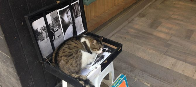 Cats of Istanbul – Part III