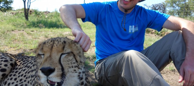 What Sounds Do Cheetahs Make?