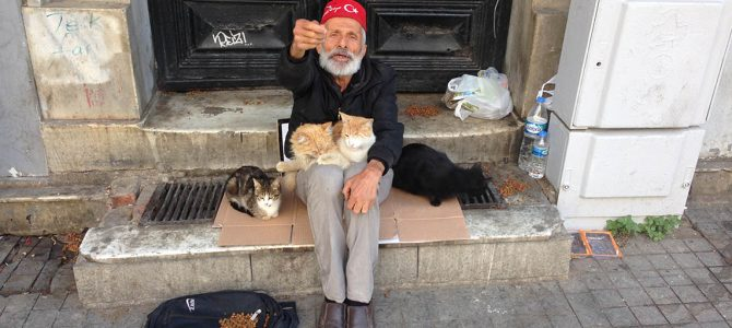 Cats of Istanbul – Part V